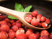 Wild strawberries in a wooden spoon. Wild strawberries in a wooden spoon inside an earthenware basin Stock Photography