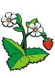 Wild strawberry. With flowers & leaf vector illustration