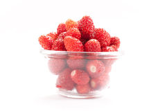 Wild Strawberry. One of the most delicious, rare and expensive berries in the world stock photo