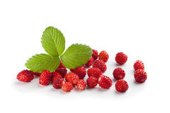 Wild strawberry. Plant with green leaves royalty free stock photography