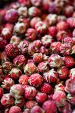 Wild strawberry Royalty Free Stock Photos