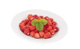 Wild Strawberry Stock Images