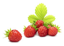 Free Wild Strawberry Royalty Free Stock Image - 29296516