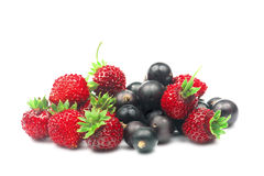 Wild Strawberry And Blackcurrant. Stock Photography