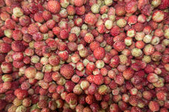 Wild strawberry background Stock Photo