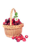 Wild strawberry in a basket. Stock Image