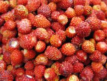 Wild strawberry berries fruit dessert background Royalty Free Stock Photo