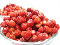 Wild strawberry berries fruit dessert with yogurt Stock Photo