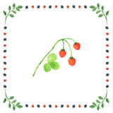 Wild strawberry berries on a white background framed in berry Stock Photos