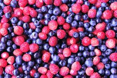 Wild strawberry and bilberry Stock Photo