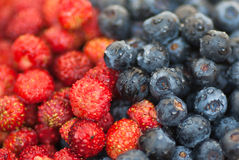 Wild strawberry and blueberry Royalty Free Stock Image