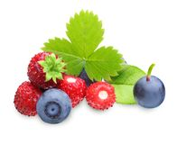 Wild strawberry and blueberry isolated Stock Image