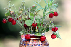 Wild strawberry bouquet Stock Image