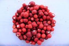 Wild strawberry. In the bucket. Ripe berries Stock Photos