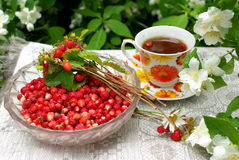Wild strawberry and a cap of tea Stock Photos