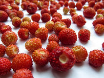 Wild strawberry close-up Royalty Free Stock Images