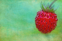 Wild strawberry closeup Stock Images