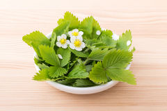 Wild strawberry. Fresh leaves and flowers of the Wild strawberry Stock Photo