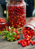 Wild strawberry harvest. (banks with berries and a bunch of strawberries royalty free stock images