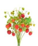 Wild strawberry isolated on white background Stock Photos