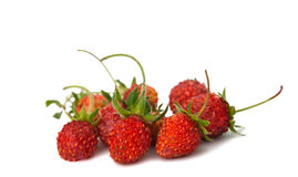 Wild strawberry isolated Royalty Free Stock Photo