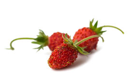 Wild strawberry isolated Stock Photography