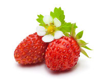 Wild strawberry isolated on white. Stock Photography