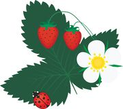 Wild strawberry and ladybird Royalty Free Stock Image