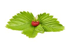 Wild strawberry and leaf Stock Photos