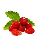 Wild strawberry Stock Images