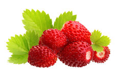 Wild strawberry macro Stock Images