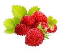 Wild strawberry macro. Isolated on white Royalty Free Stock Photos