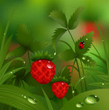 Wild strawberry in the morning forest vector illustration