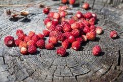 The wild strawberry royalty free stock photos