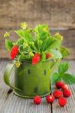 Wild strawberry. Royalty Free Stock Photography