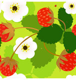 Wild strawberry seamless pattern Stock Photo