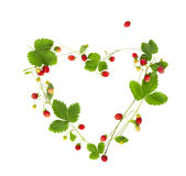 Wild strawberry set Royalty Free Stock Images