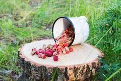Wild berries in the forest. Wild strawberry on stump on green background Stock Images