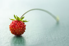 Wild Strawberry Stock Image