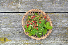 Wild strawberry for tea in small wicker basket Stock Image