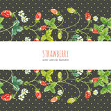 Wild strawberry. Vector background Stock Image