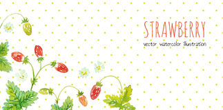 Wild strawberry. Vector background Royalty Free Stock Image