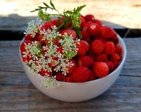 Wild strawberry in a white Cup royalty free stock photo