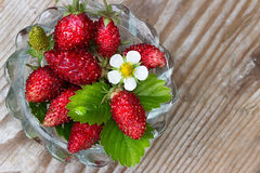 Wild strawberry on a wooden background Royalty Free Stock Photo