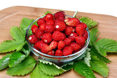 Wild strawberry Royalty Free Stock Images