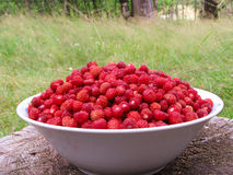 Wild Strawberry1 Stock Image