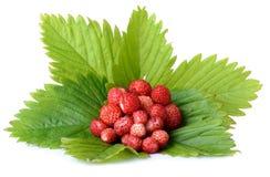 Wild strawberrys Stock Photo