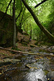 Wild stream Brodenbach next to Mosel River Stock Photography