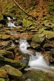 Wild stream in Czech republic Stock Photography