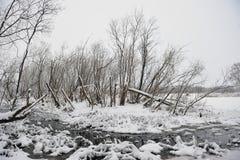 Wild stream Stock Photos